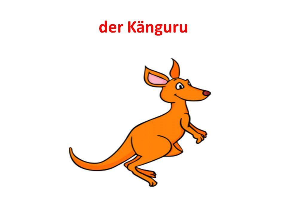 der Känguru