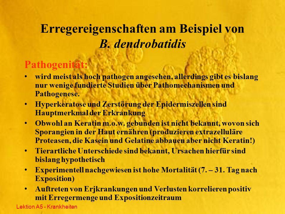 Thalli (kaum auf Amphibienhaut nachzuweisen!) Zoosporangium Zoospore ´(nach Berger et al.