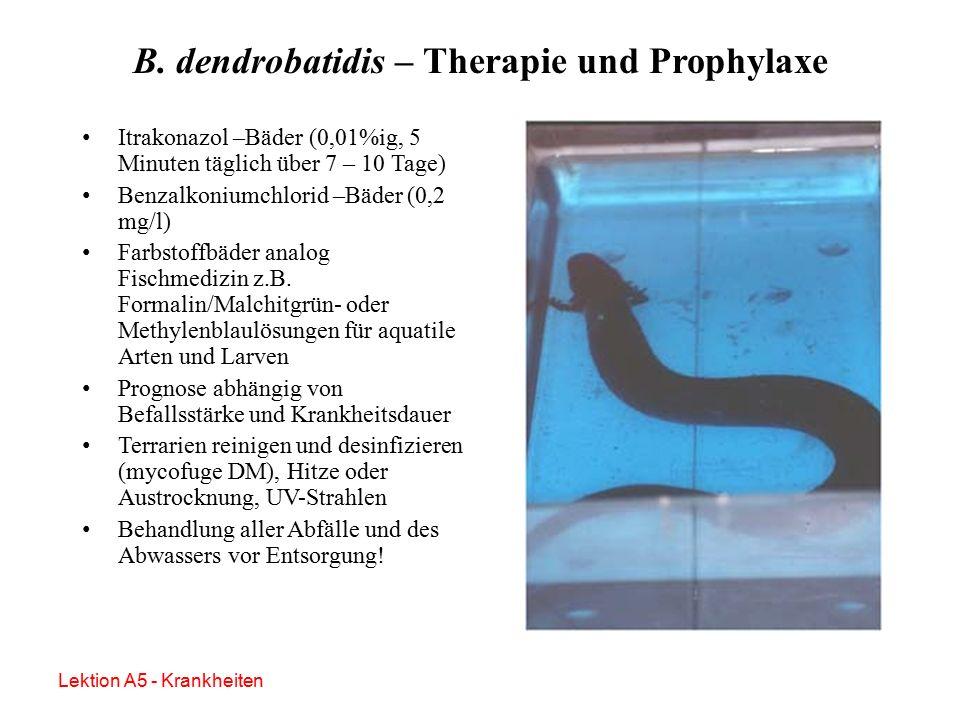 B. dendrobatidis - Nebenbefunde Fettige bzw.