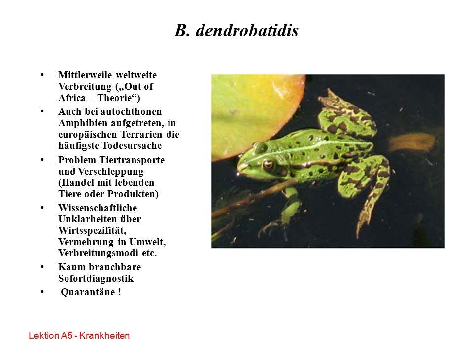 B. dendrobatidis – Therapie und Prophylaxe Itrakonazol –Bäder (0,01%ig, 5 Minuten täglich über 7 – 10 Tage) Benzalkoniumchlorid –Bäder (0,2 mg/l) Farb
