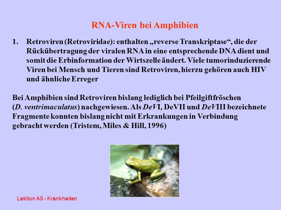 RNA-Viren (aus Essbauer & Ahne, 2001) Lektion A5 - Krankheiten