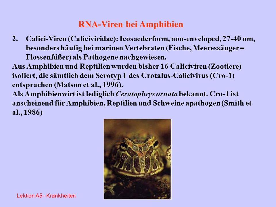 """RNA-Viren bei Amphibien 1.Retroviren (Retroviridae): enthalten """"reverse Transkriptase , die der Rückübertragung der viralen RNA in eine entsprechende DNA dient und somit die Erbinformation der Wirtszelle ändert."""