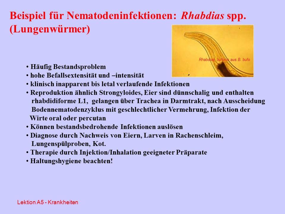 Beispiele für bakterielle Infektionen: Chlamydien (Chlamydophila) Seit 1982 bei Amphibien (Xenopus aus Südafrika) bekannt Ursprünglich als Ch.