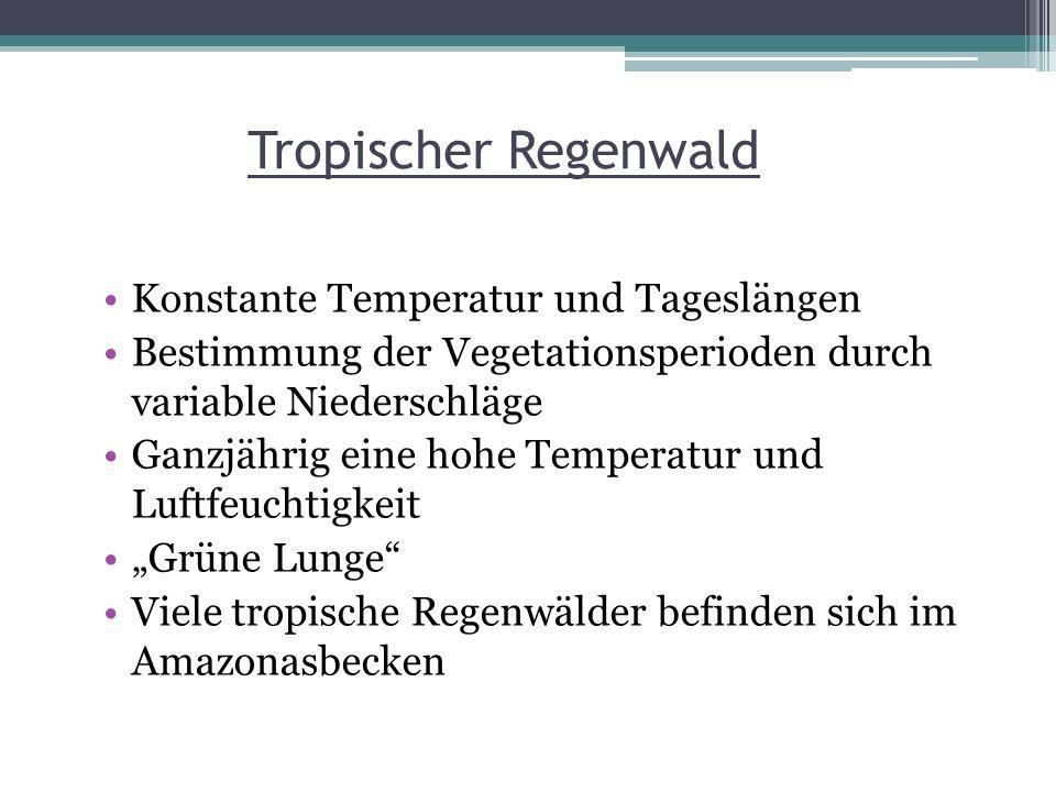 Tropischer Regenwald Konstante Temperatur und Tageslängen Bestimmung der Vegetationsperioden durch variable Niederschläge Ganzjährig eine hohe Tempera