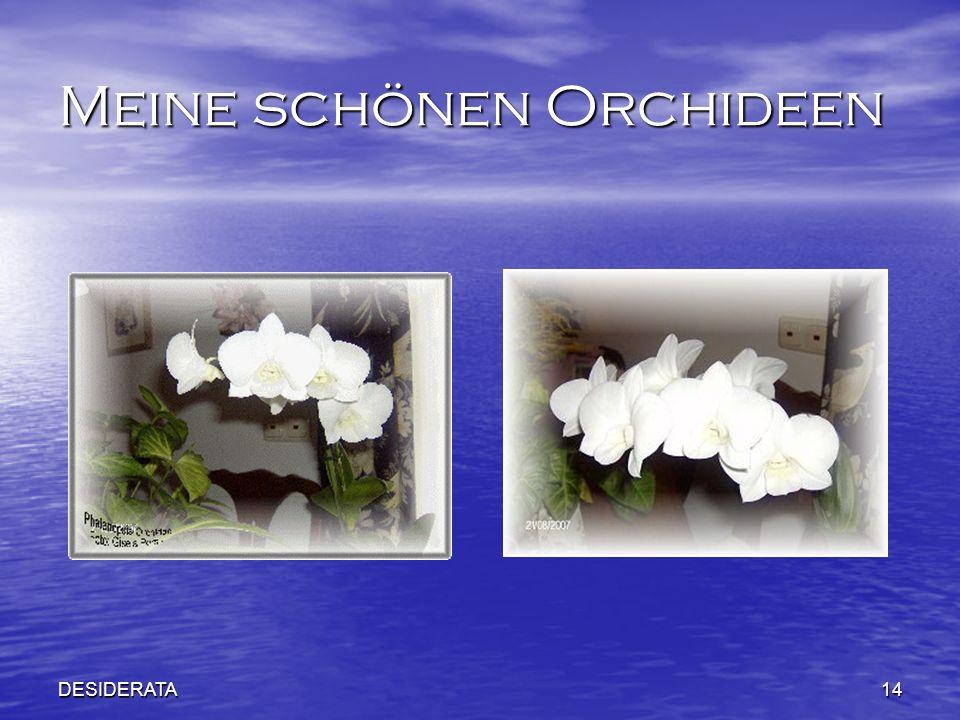 DESIDERATA14 Meine schönen Orchideen