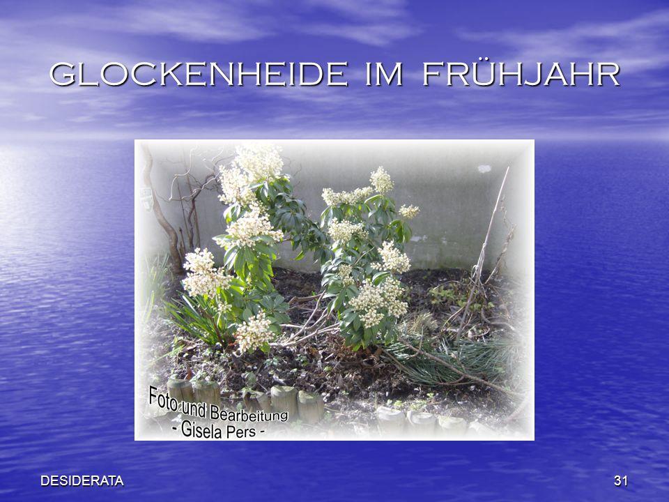 DESIDERATA31 GLOCKENHEIDE IM FRÜHJAHR