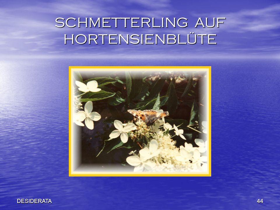 DESIDERATA44 SCHMETTERLING AUF HORTENSIENBLÜTE