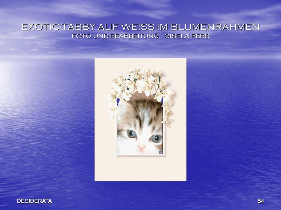 DESIDERATA54 EXOTIC-TABBY AUF WEISS IM BLUMENRAHMEN FOTO UND BEARBEITUNG: GISELA PERS