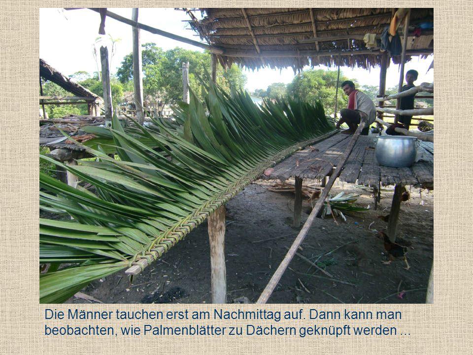 Die Männer tauchen erst am Nachmittag auf. Dann kann man beobachten, wie Palmenblätter zu Dächern geknüpft werden...