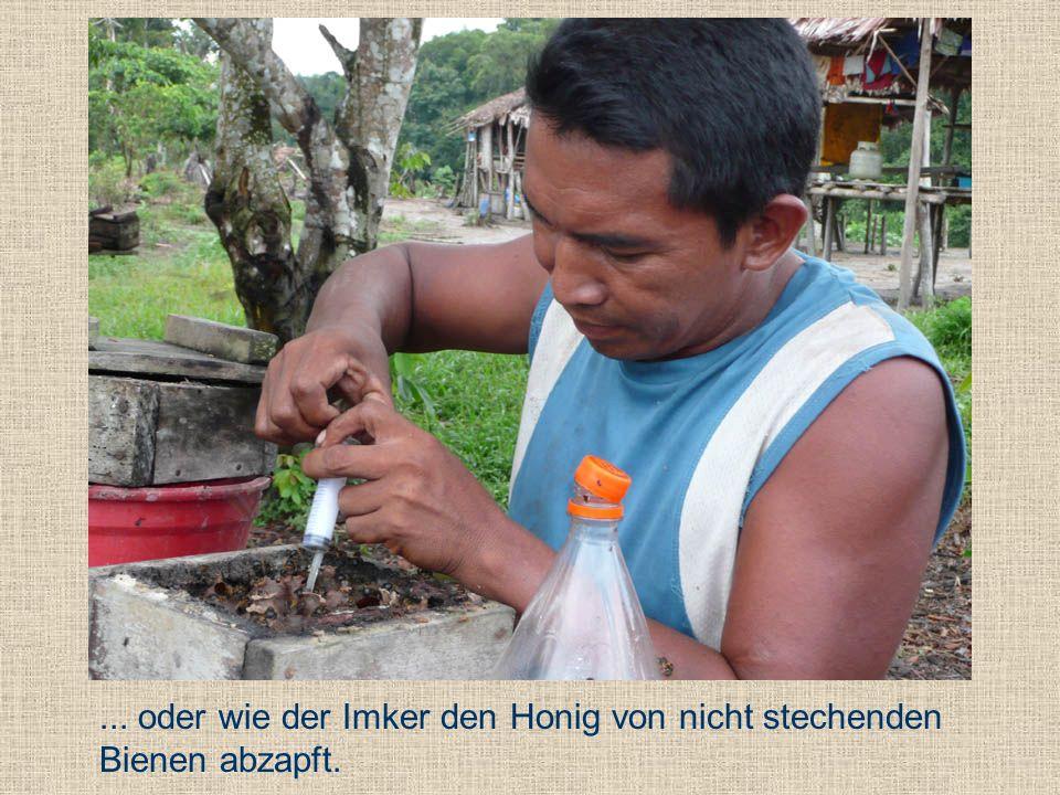 ... oder wie der Imker den Honig von nicht stechenden Bienen abzapft.