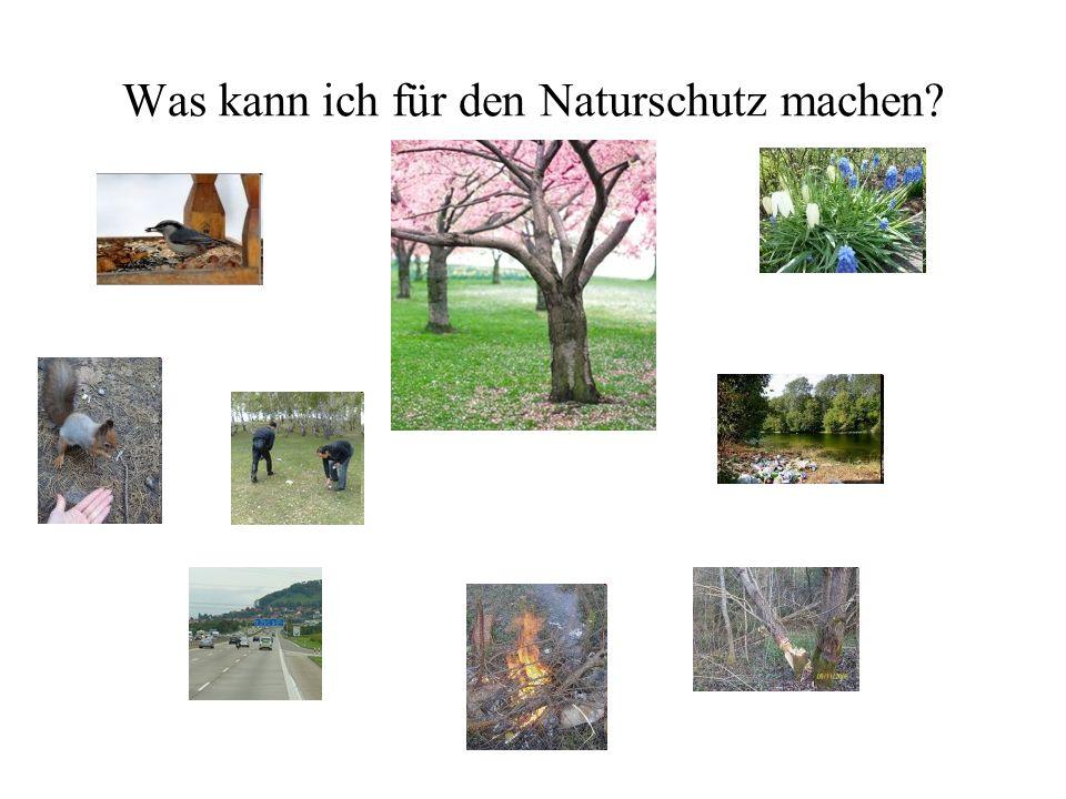 Was kann ich für den Naturschutz machen?