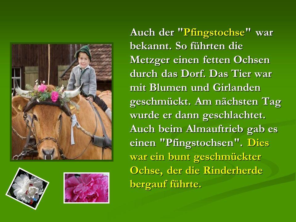 Auch der Pfingstochse war bekannt. So führten die Metzger einen fetten Ochsen durch das Dorf.