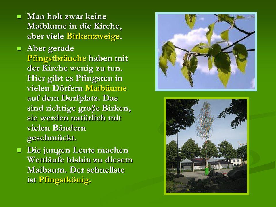 Man holt zwar keine Maiblume in die Kirche, aber viele Birkenzweige.