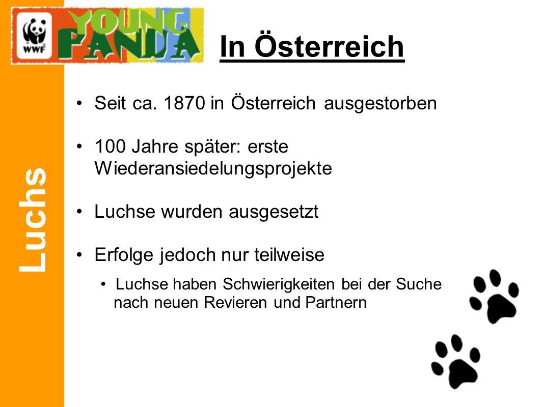 Luchs In Österreich Seit ca.