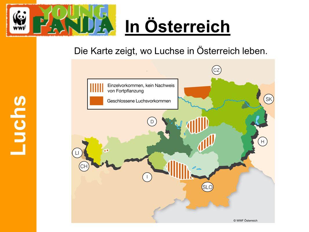 Luchs In Österreich Die Karte zeigt, wo Luchse in Österreich leben.