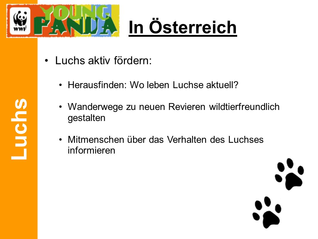Luchs In Österreich DANKE für eure Aufmerksamkeit Fragen?