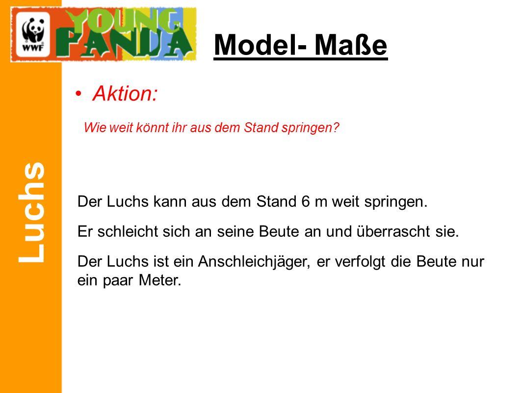 Luchs Model- Maße Aktion: Wie weit könnt ihr aus dem Stand springen.