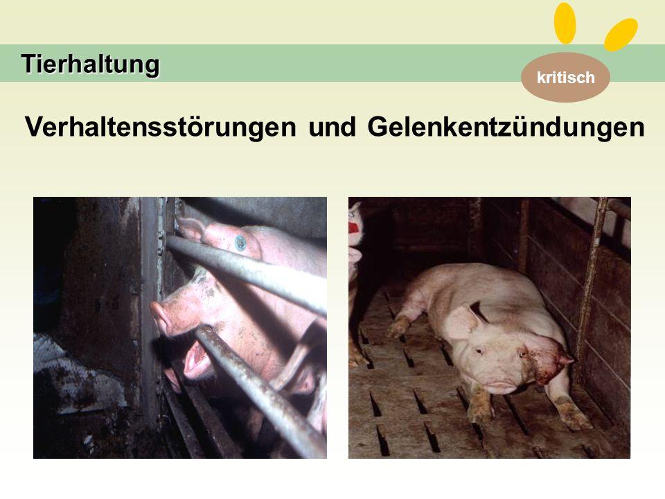 kritisch Tierhaltung Verhaltensstörungen und Gelenkentzündungen