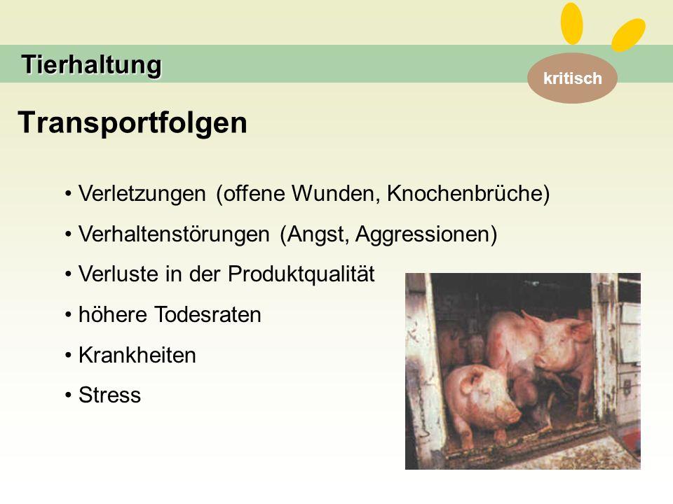 kritisch Transportfolgen Tierhaltung Verletzungen (offene Wunden, Knochenbrüche) Verhaltenstörungen (Angst, Aggressionen) Verluste in der Produktqualität höhere Todesraten Krankheiten Stress