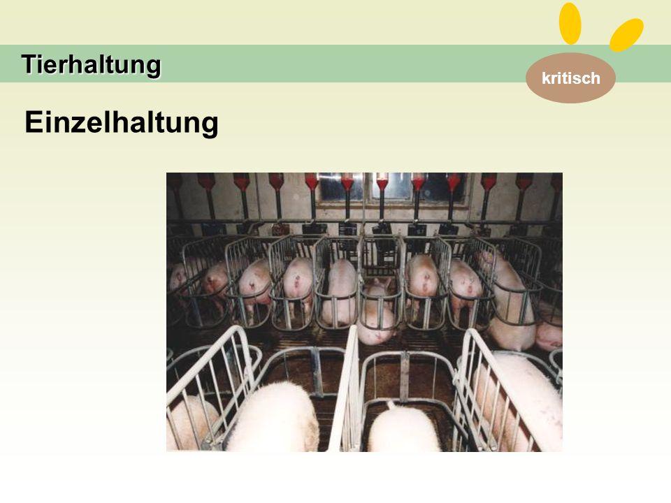 Tierhaltung Einzelhaltung