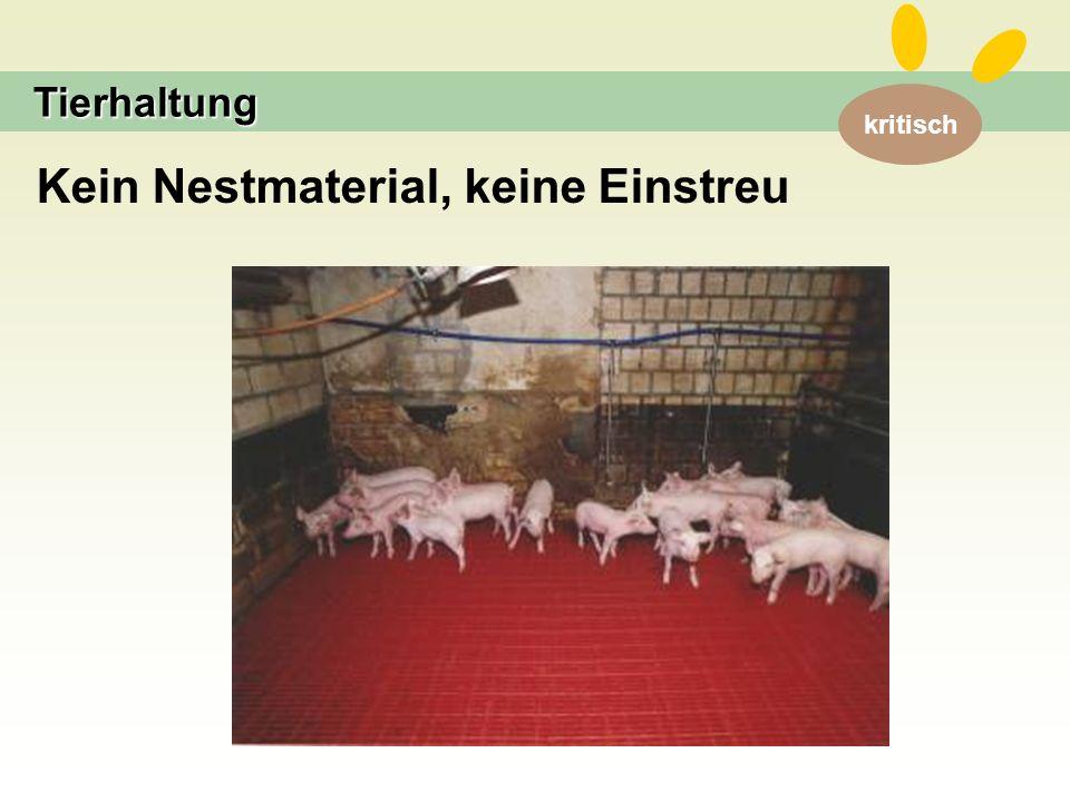 kritisch Tierhaltung Kein Nestmaterial, keine Einstreu