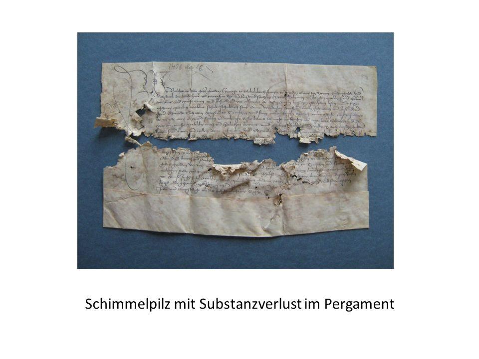 Schimmelpilz mit Substanzverlust im Pergament