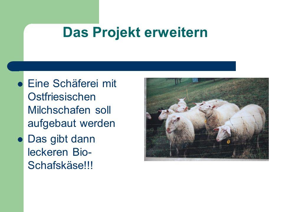 Das Projekt erweitern Eine Schäferei mit Ostfriesischen Milchschafen soll aufgebaut werden Das gibt dann leckeren Bio- Schafskäse!!!