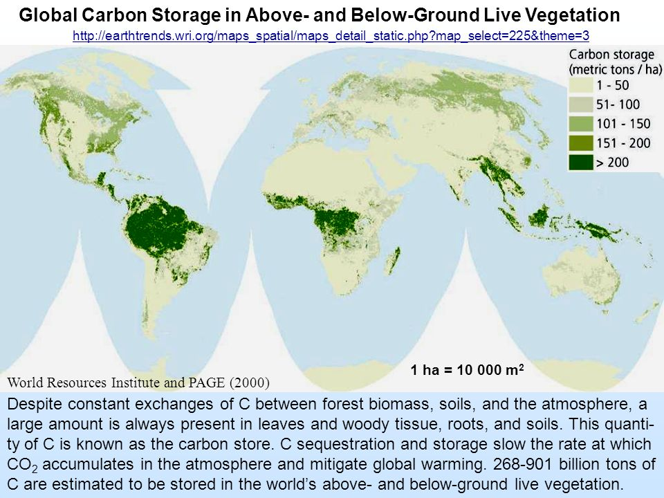 Global Carbon Storage in Above- and Below-Ground Live Vegetation Despite constant exchanges of C between forest biomass, soils, and the atmosphere, a large amount is always present in leaves and woody tissue, roots, and soils.