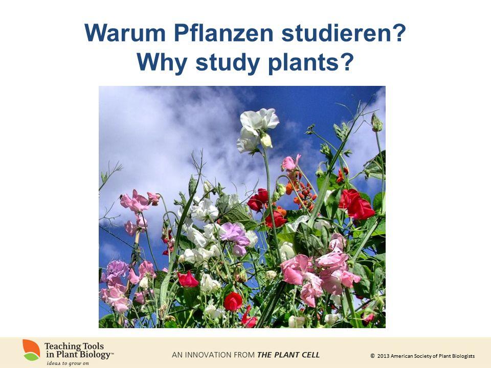 © 2013 American Society of Plant Biologists Produktion von Plastik aus erneuerbarem Pflanzenmaterial Energie aus der Sonne Photo Illustration courtesy S.