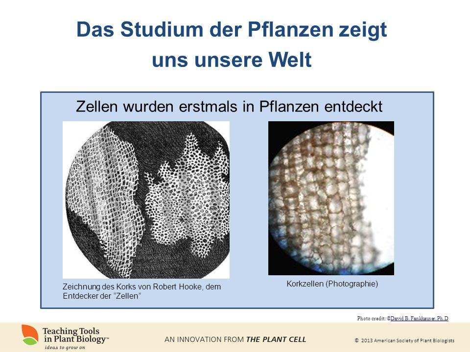 © 2013 American Society of Plant Biologists Das Studium der Pflanzen zeigt uns unsere Welt Zeichnung des Korks von Robert Hooke, dem Entdecker der Zellen Zellen wurden erstmals in Pflanzen entdeckt Korkzellen (Photographie) Photo credit: ©David B.