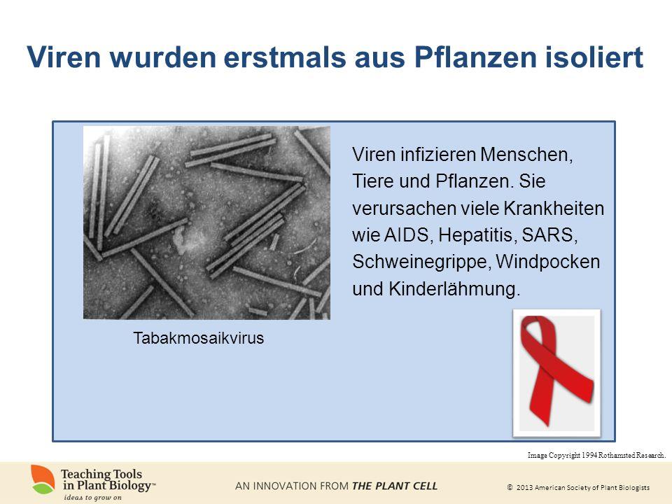 © 2013 American Society of Plant Biologists Viren wurden erstmals aus Pflanzen isoliert Tabakmosaikvirus Viren infizieren Menschen, Tiere und Pflanzen.