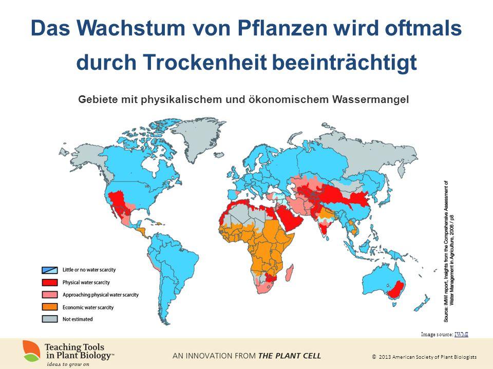 © 2013 American Society of Plant Biologists Das Wachstum von Pflanzen wird oftmals durch Trockenheit beeinträchtigt Image source: IWMI Gebiete mit physikalischem und ökonomischem Wassermangel