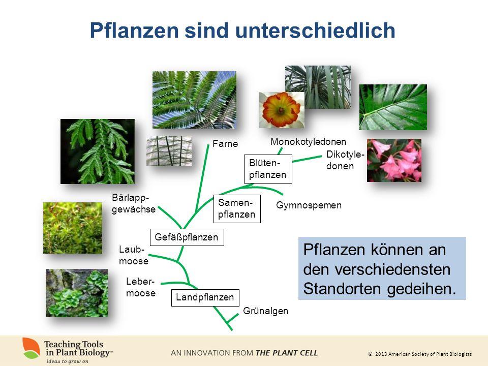 © 2013 American Society of Plant Biologists Pflanzen machen uns glücklich Dravigne, A.