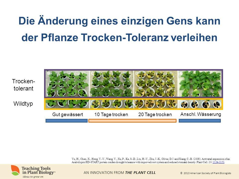 © 2013 American Society of Plant Biologists Die Änderung eines einzigen Gens kann der Pflanze Trocken-Toleranz verleihen Anschl.
