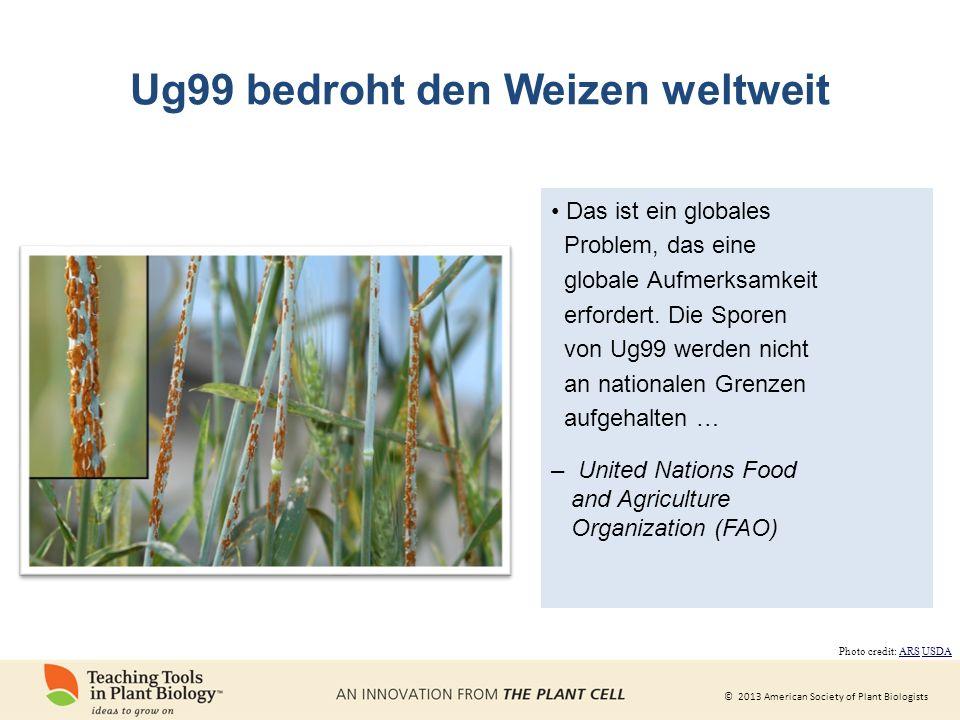 © 2013 American Society of Plant Biologists Ug99 bedroht den Weizen weltweit Das ist ein globales Problem, das eine globale Aufmerksamkeit erfordert.