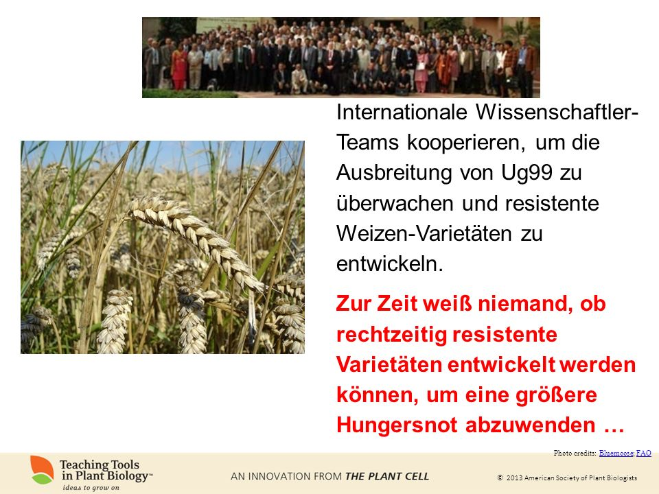 © 2013 American Society of Plant Biologists Internationale Wissenschaftler- Teams kooperieren, um die Ausbreitung von Ug99 zu überwachen und resistente Weizen-Varietäten zu entwickeln.