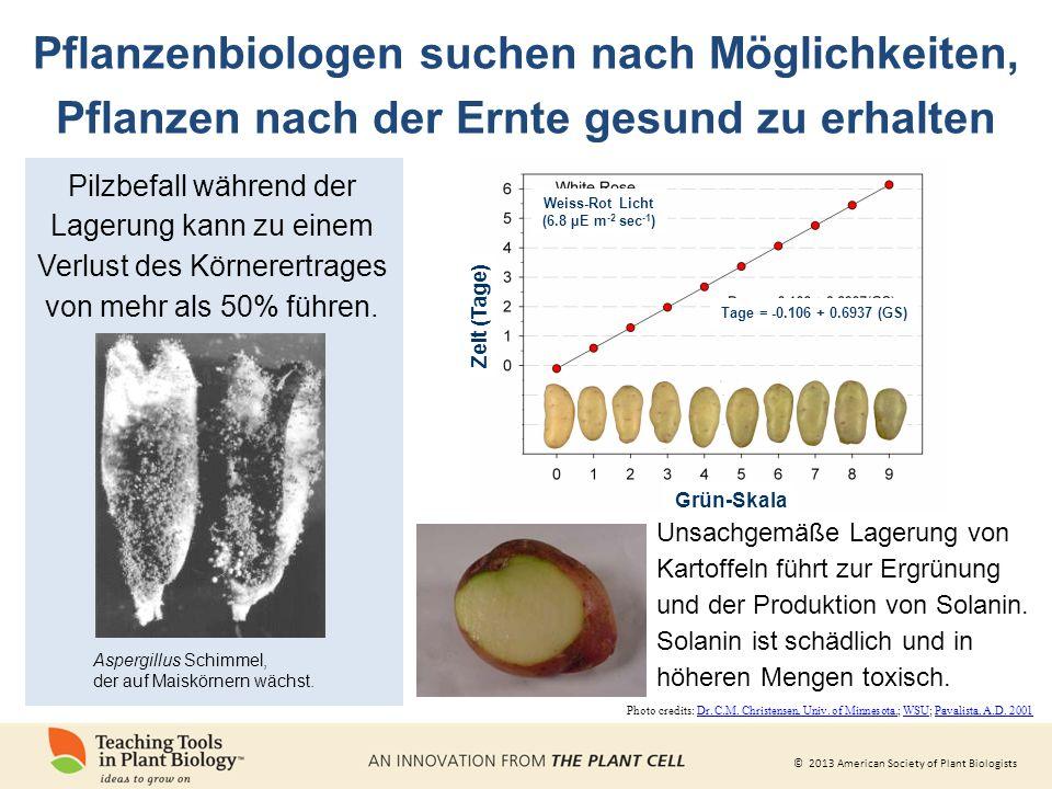 © 2013 American Society of Plant Biologists Unsachgemäße Lagerung von Kartoffeln führt zur Ergrünung und der Produktion von Solanin.
