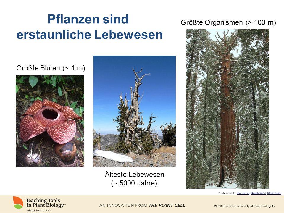 © 2013 American Society of Plant Biologists Wir können nicht ohne Pflanzen leben Pflanzen produzieren den größten Teil des Sauerstoffs, von dem wir leben.