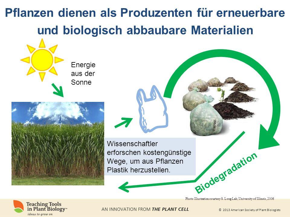 © 2013 American Society of Plant Biologists Biodegradation Wissenschaftler erforschen kostengünstige Wege, um aus Pflanzen Plastik herzustellen.