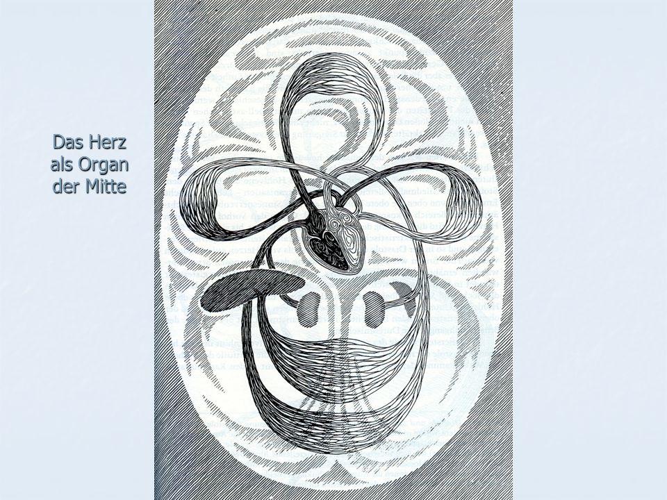 Das Herz als Organ der Mitte