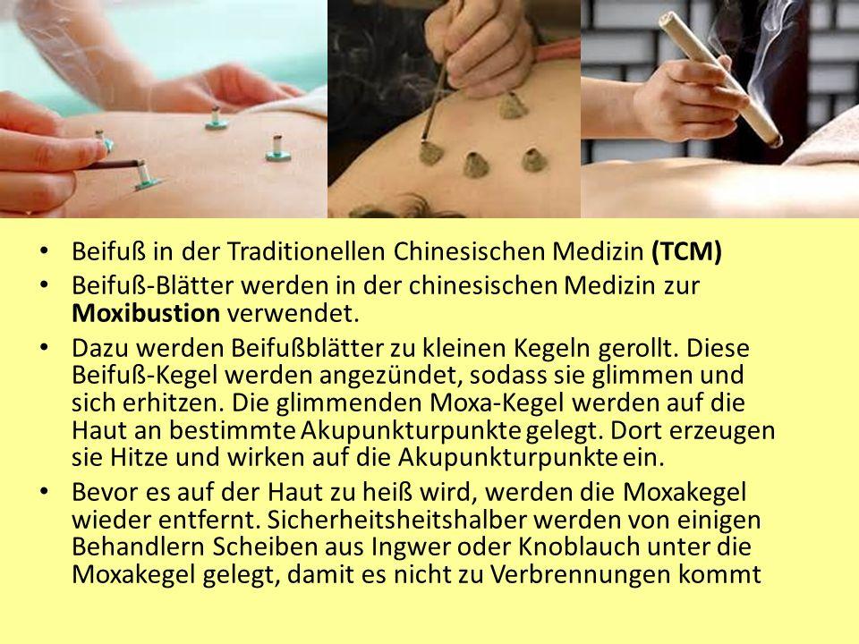 Beifussanwendungen Beifuß in der Traditionellen Chinesischen Medizin (TCM) Beifuß-Blätter werden in der chinesischen Medizin zur Moxibustion verwendet.