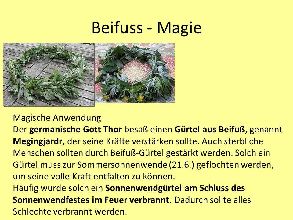 Beifuss - Magie Magische Anwendung Der germanische Gott Thor besaß einen Gürtel aus Beifuß, genannt Megingjardr, der seine Kräfte verstärken sollte.