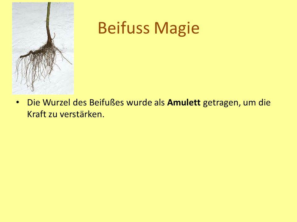 Beifuss Magie Die Wurzel des Beifußes wurde als Amulett getragen, um die Kraft zu verstärken.