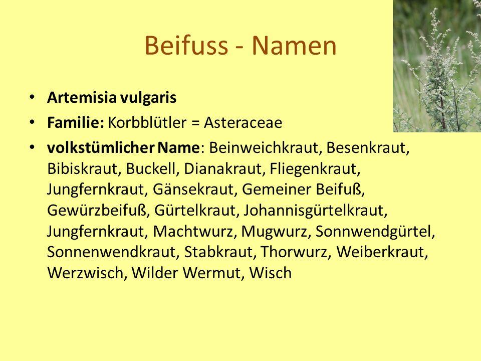 Beifuss - Namen Artemisia vulgaris Familie: Korbblütler = Asteraceae volkstümlicher Name: Beinweichkraut, Besenkraut, Bibiskraut, Buckell, Dianakraut, Fliegenkraut, Jungfernkraut, Gänsekraut, Gemeiner Beifuß, Gewürzbeifuß, Gürtelkraut, Johannisgürtelkraut, Jungfernkraut, Machtwurz, Mugwurz, Sonnwendgürtel, Sonnenwendkraut, Stabkraut, Thorwurz, Weiberkraut, Werzwisch, Wilder Wermut, Wisch