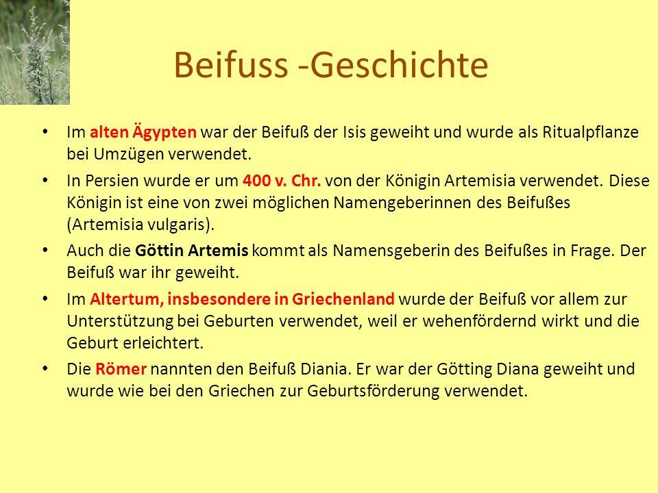 Beifuss -Geschichte Im alten Ägypten war der Beifuß der Isis geweiht und wurde als Ritualpflanze bei Umzügen verwendet.