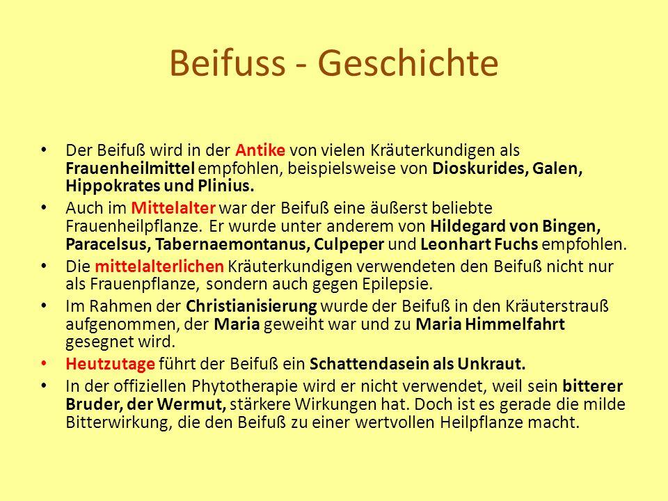 Beifuss - Geschichte Der Beifuß wird in der Antike von vielen Kräuterkundigen als Frauenheilmittel empfohlen, beispielsweise von Dioskurides, Galen, Hippokrates und Plinius.