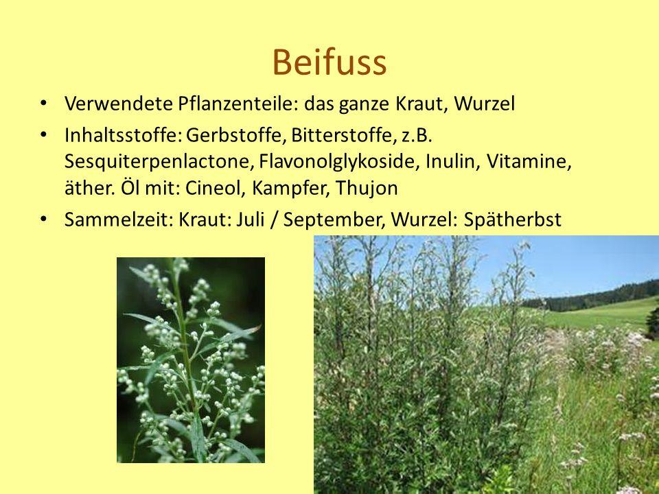 Beifuss Verwendete Pflanzenteile: das ganze Kraut, Wurzel Inhaltsstoffe: Gerbstoffe, Bitterstoffe, z.B.