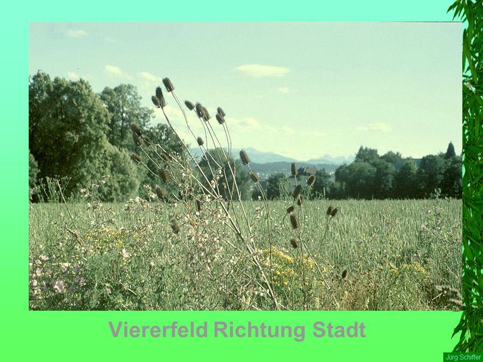 Viererfeld Richtung Stadt
