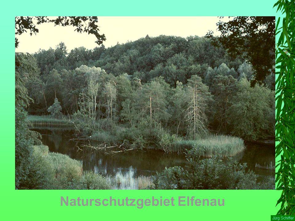 Naturschutzgebiet Elfenau