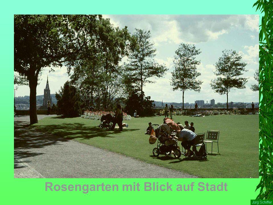 Rosengarten mit Blick auf Stadt